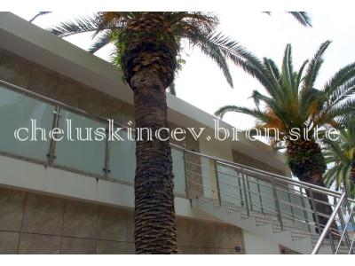 Дом отдыха «Челюскинцев» |  VIP апартаменты у моря